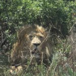 A South-African Weekend with the Animals