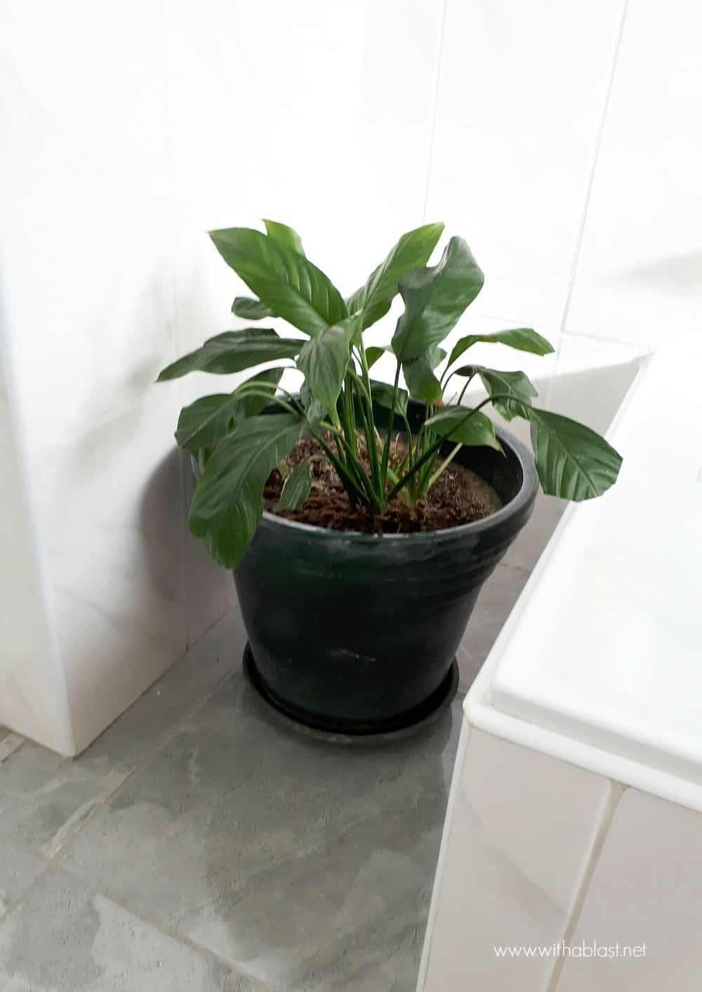 Bathroom Makeover with plant